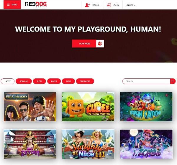 Play Online Casino Now